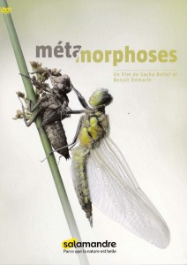 metamorphose - Copie